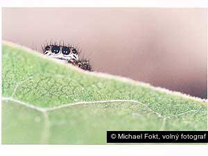 Michael Fokt, volný fotograf