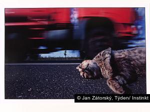Jan Zátorský, Týden/ Instinkt