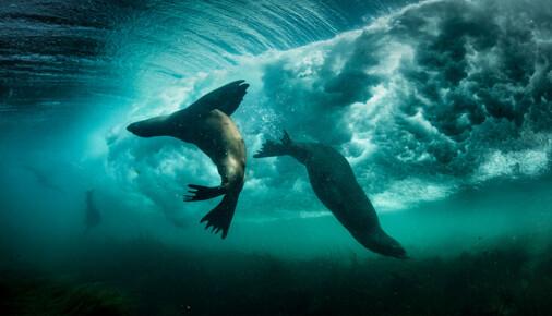 Příběhy fotografií: George Karbus - Surfaři v Pacifiku