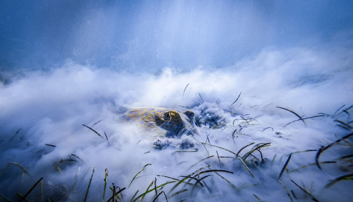 Příběhy fotografií: Jan Stria - Snídaně v trávě