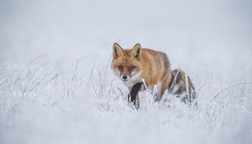 Příběh fotografie – Lukáš Kovár – Lišky