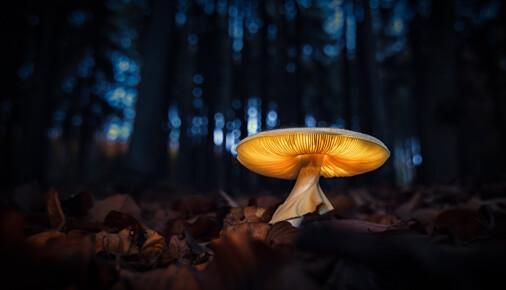 Příběh fotografie – Jan Stria - Lesní lampa