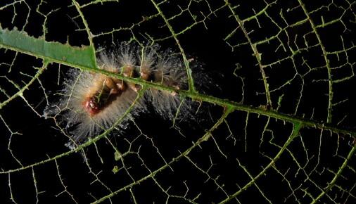 Příběh Fotografie – Petr Bambousek – Noční život v pralese
