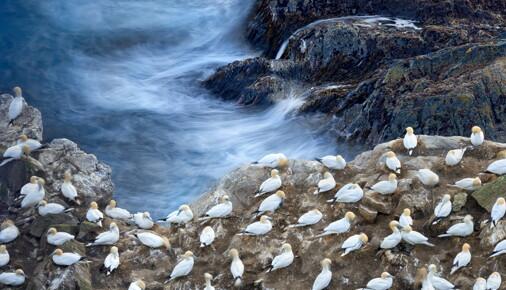 Příběh fotografie – Petr Bambousek – Terej bílý