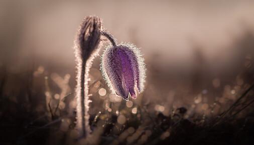 Příběh fotografie – Jan Stria – Posel jara