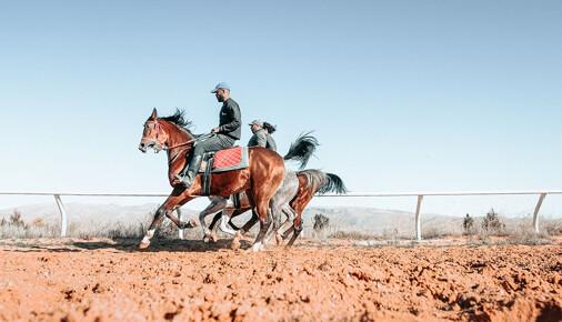 Příběhy fotografií – Jarmila Štuková – Váleční koně v Sýrii