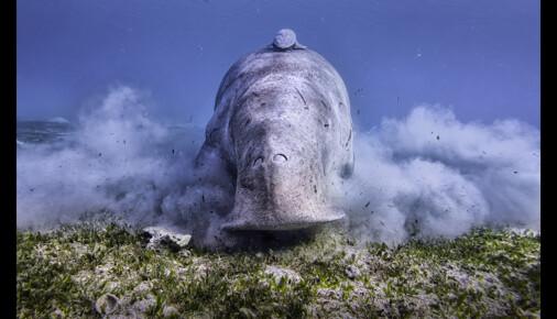 Příběh fotografie – Jan Stria – Mořský vysavač
