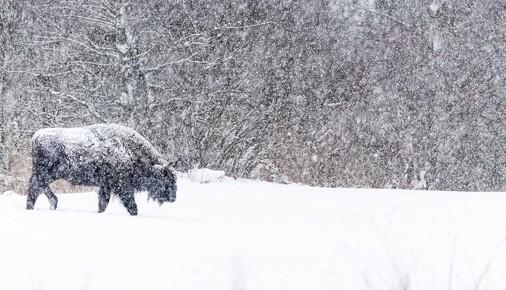 Příběh fotografie – Jan Pokluda – Bílá tma