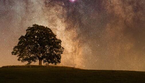 Příběh Fotografie – Lukáš Veselý – Významné stromy pod noční oblohou