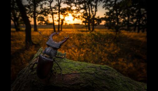 Příběh fotografie – Vít Lukáš – Ohrožený král dubového lesa