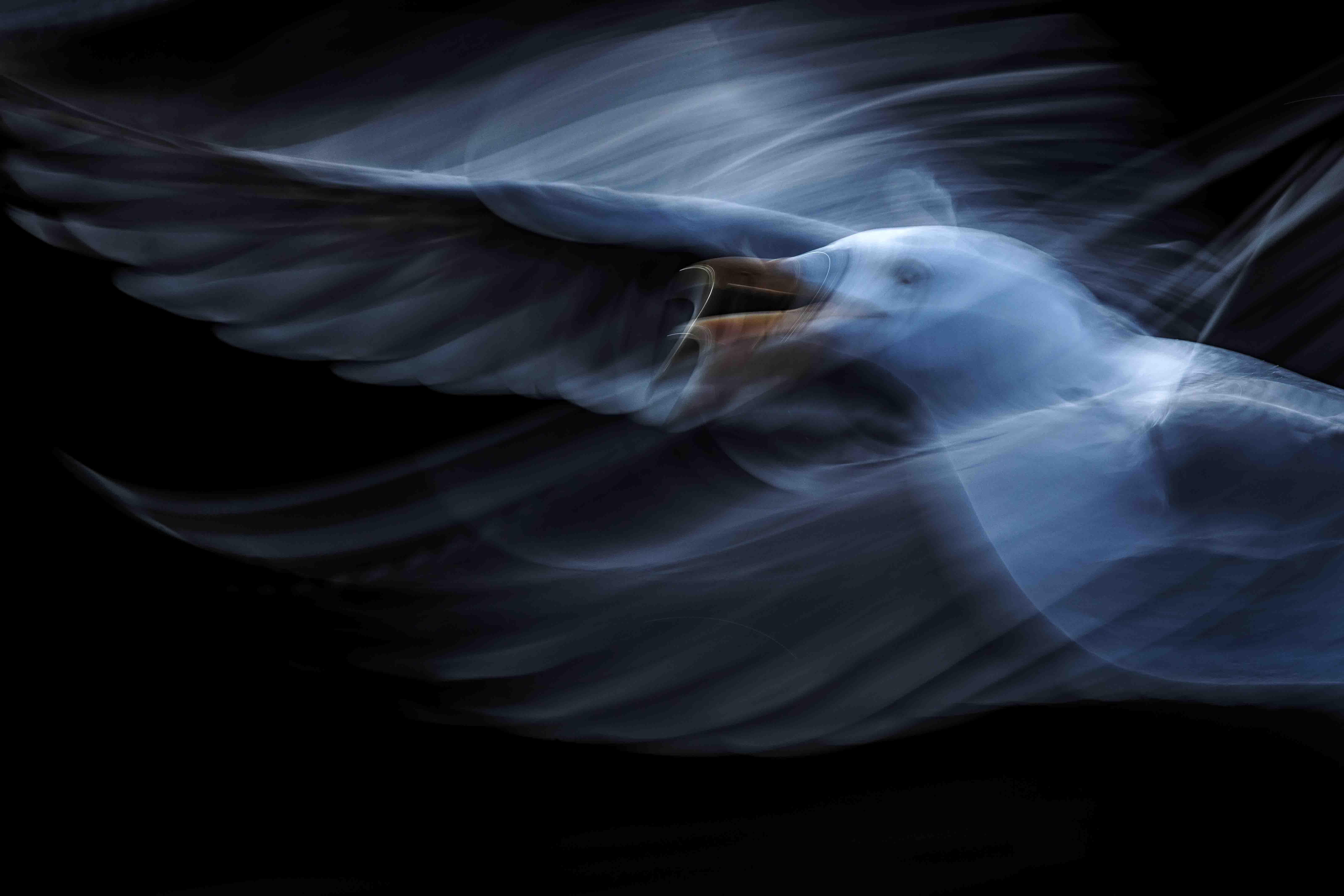 [/blog/serie_19_jiri-hrebicek_106_ptaci-duse_004UV.jpg]