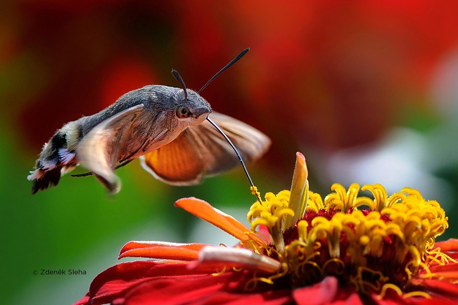 czech nature photo nominace bezobratlí zdeněk sleha