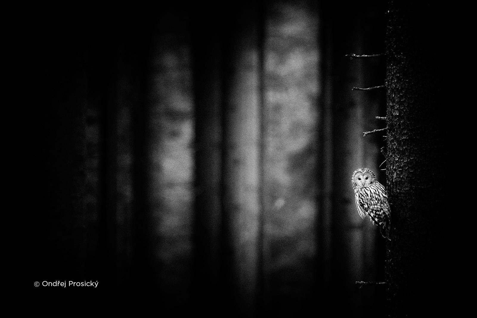 czech nature photo nominace český les – ondřej prosický