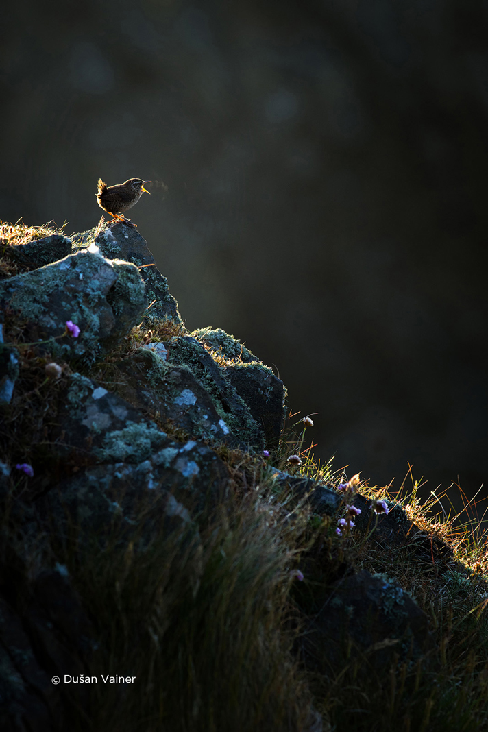czech nature photo nominace ptáci – dušan vainer