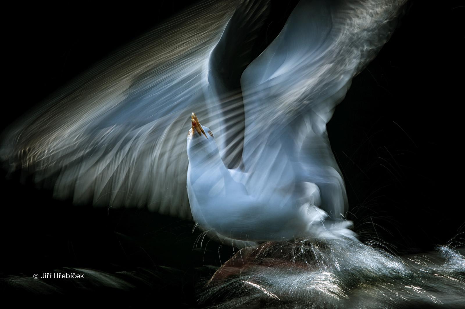 czech nature photo nominace ptáci – jiří hřebíček