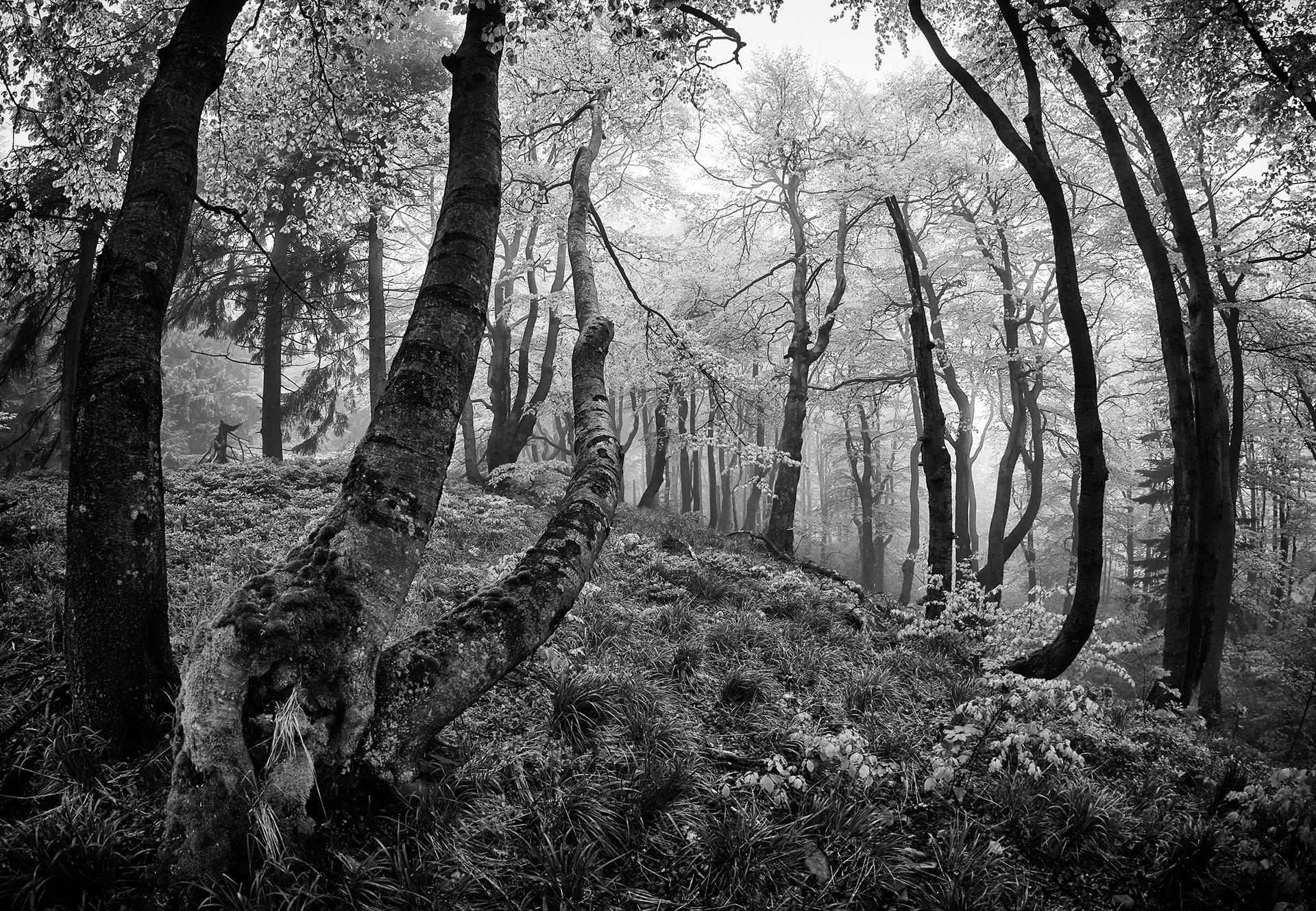 czech nature photo nominace český les – Josef Bosák