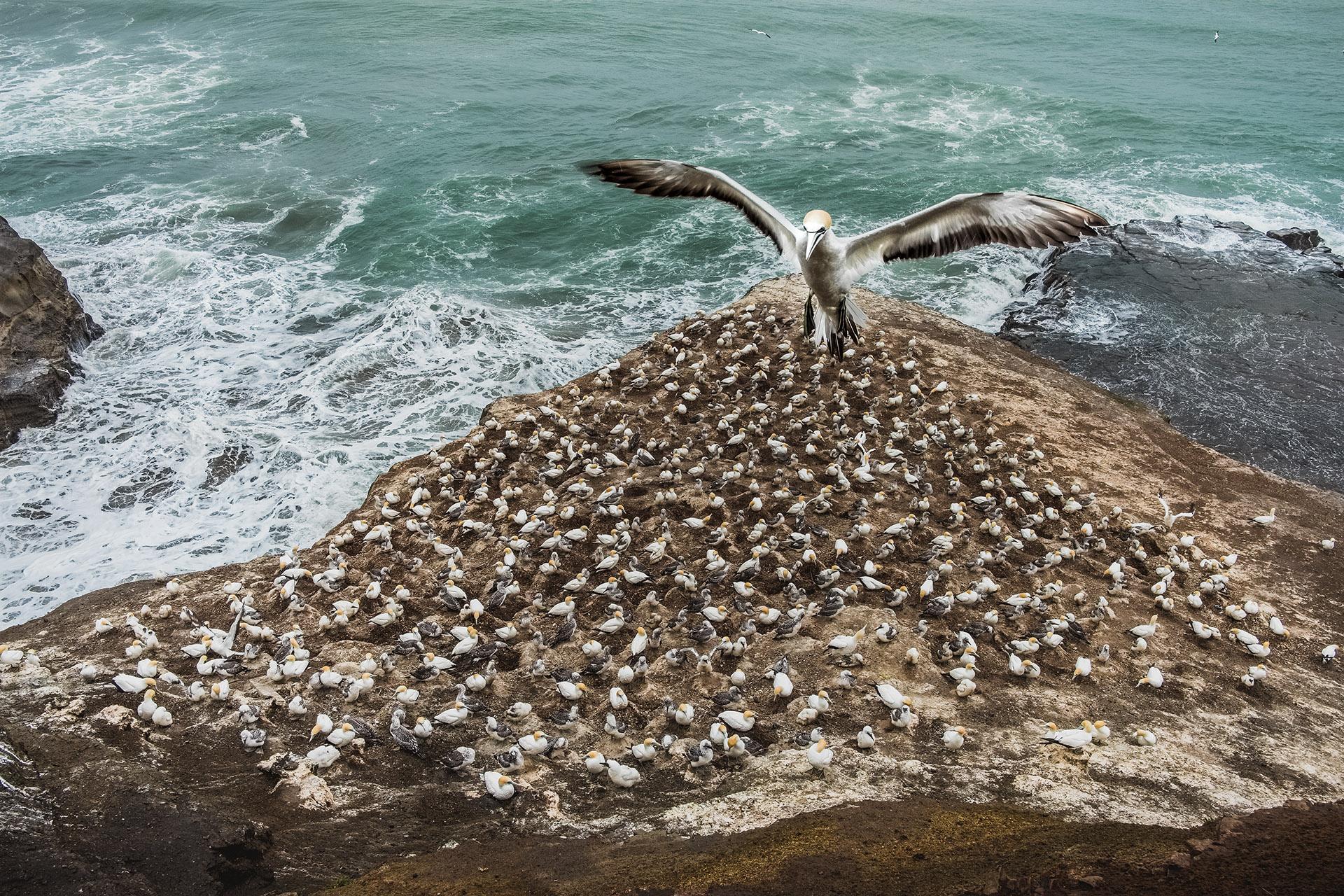 czech nature photo nominace ptáci – Lukáš Martínek