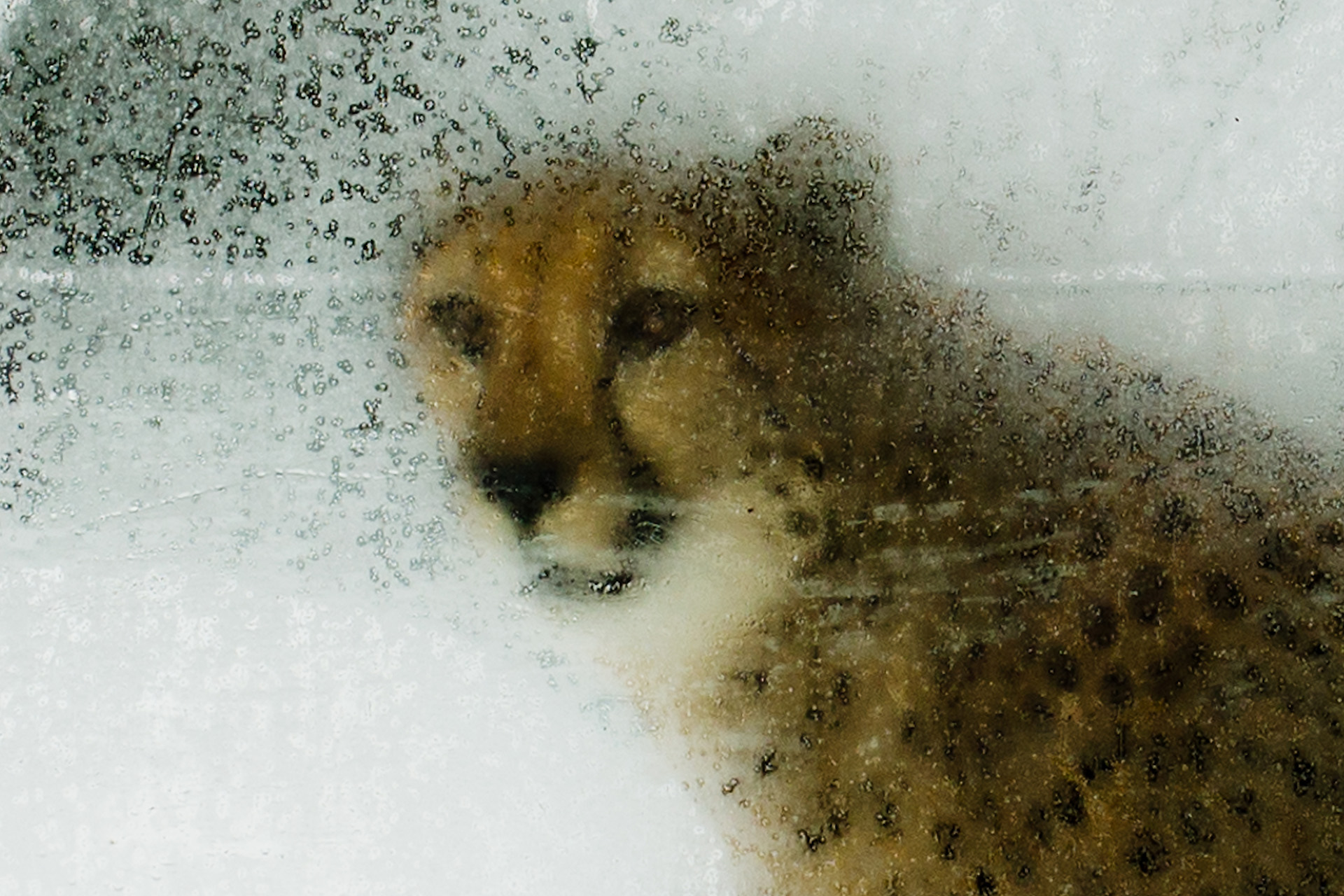 czech nature photo nominace zvířata v lidské peči - Martin Veselý