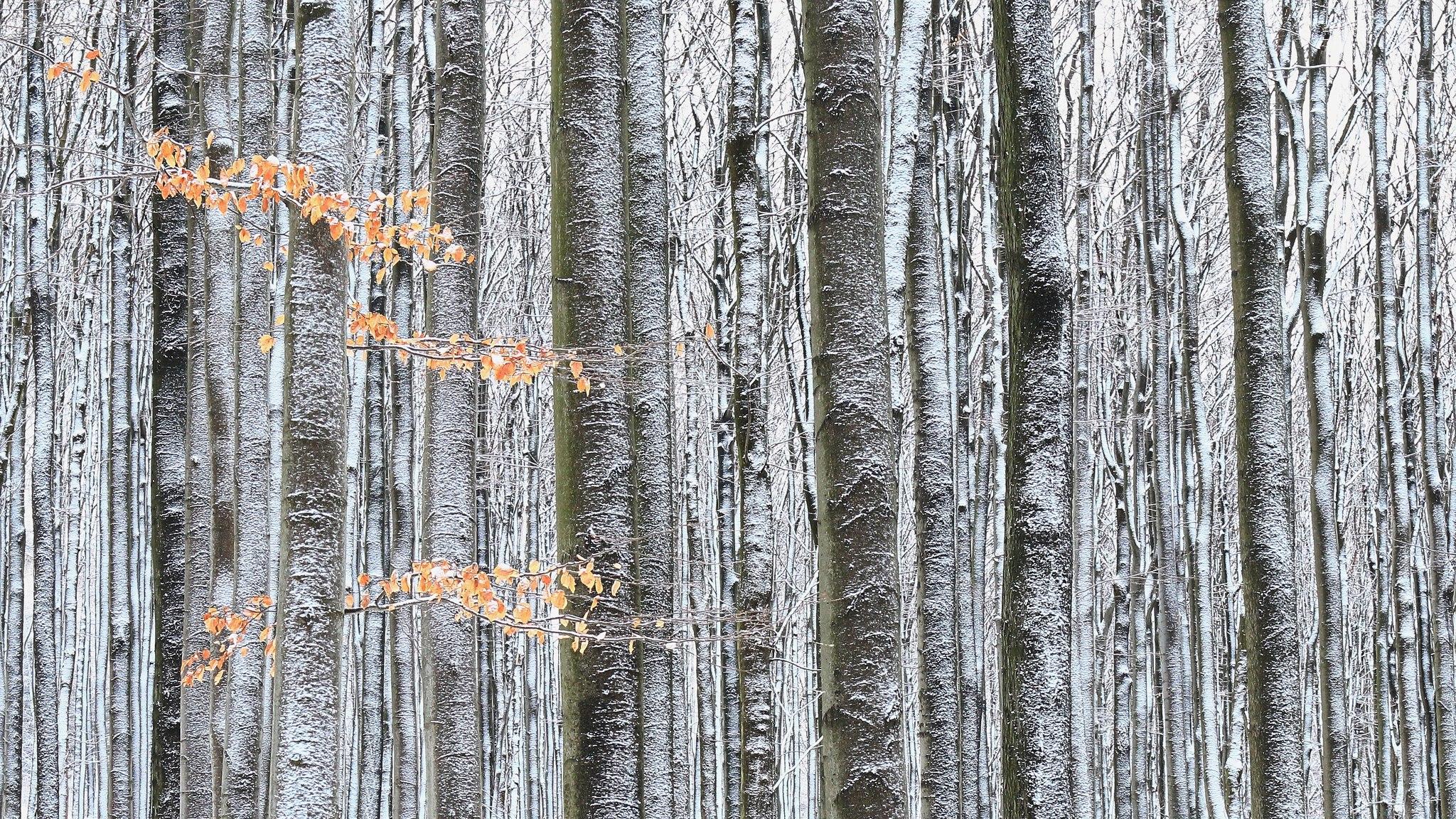 czech nature photo nominace Rostliny a houby (volně rostoucí) – Michaela Vinterová