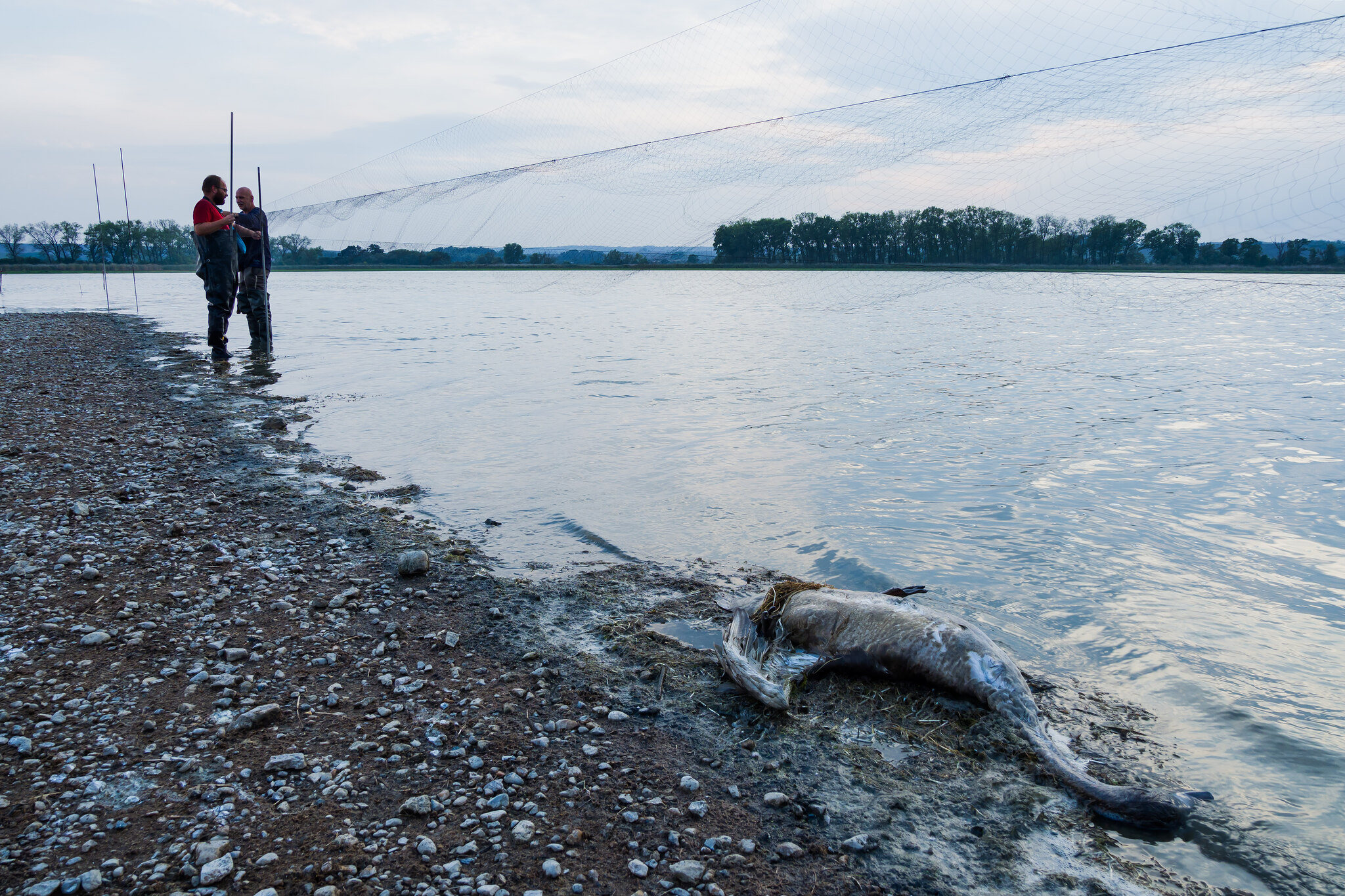 czech nature photo nominace Ohrožené druhy a jejich ochrana - Jan Miklín