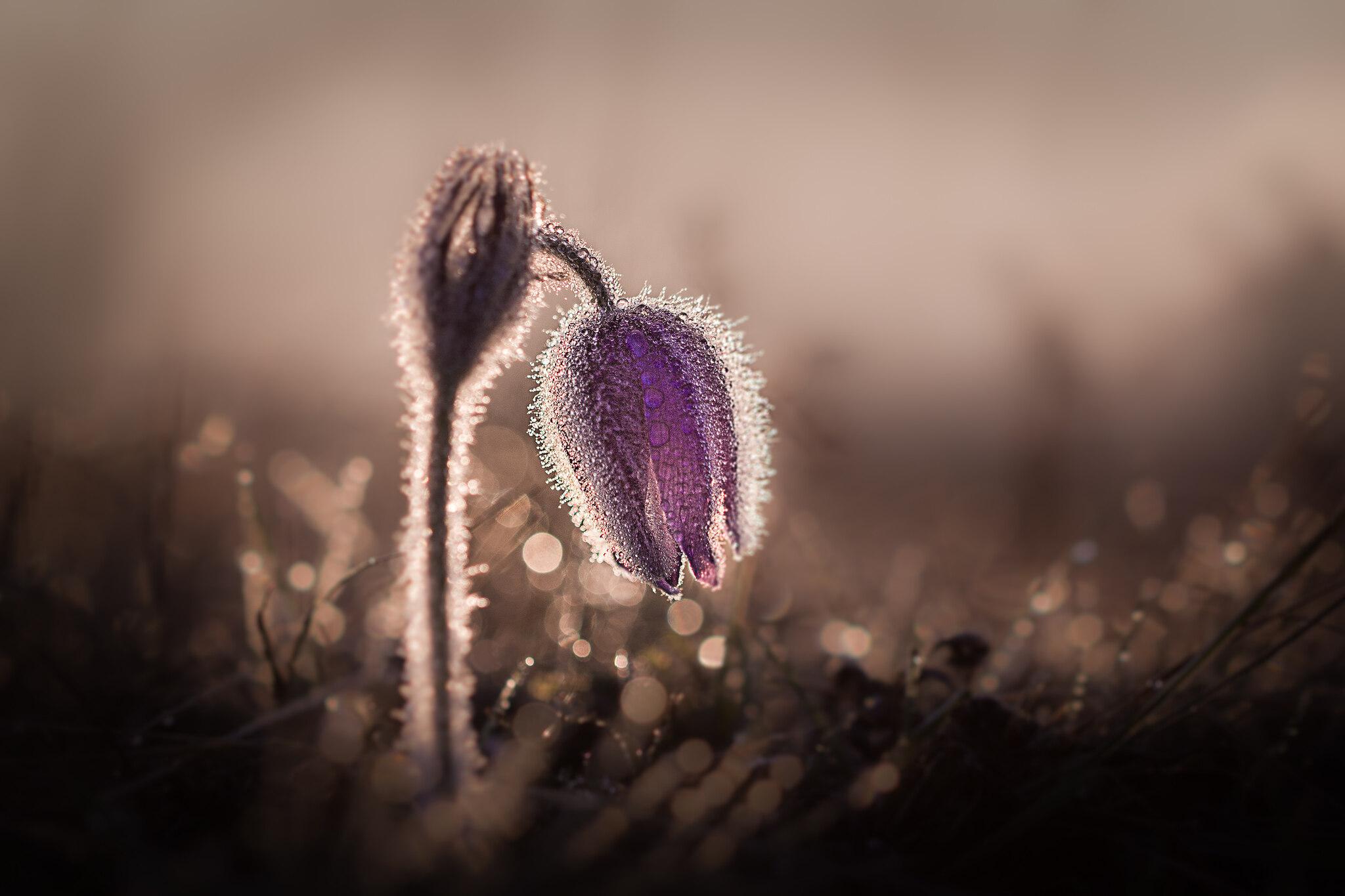 czech nature photo nominace Rostliny a houby (volně rostoucí) – Jan Stria