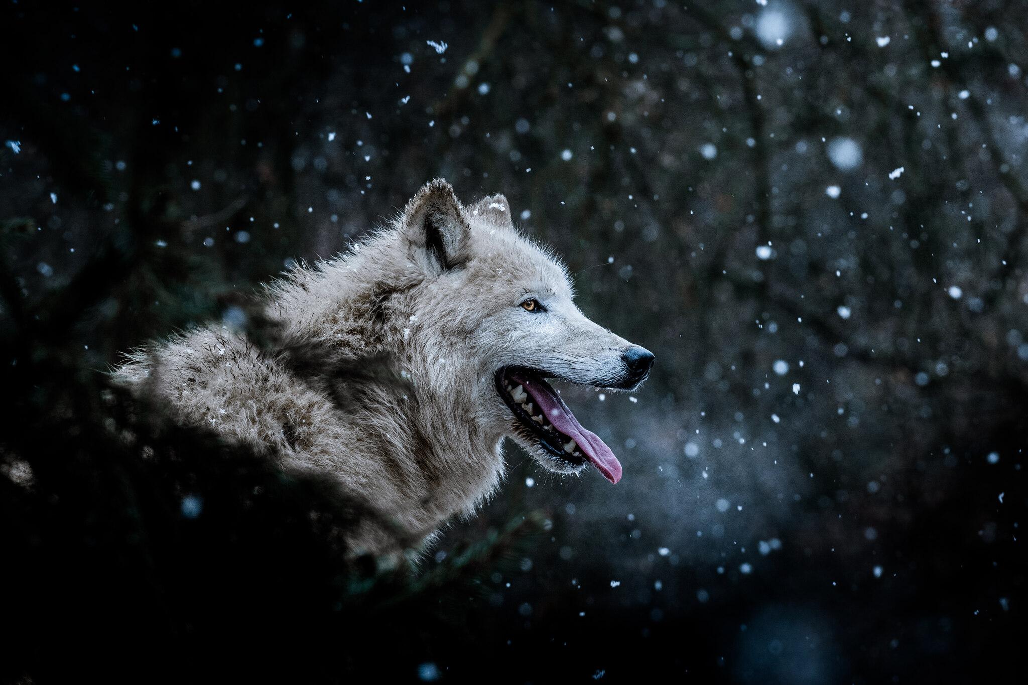czech nature photo nominace zvířata v lidské peči - Matyáš Slavík