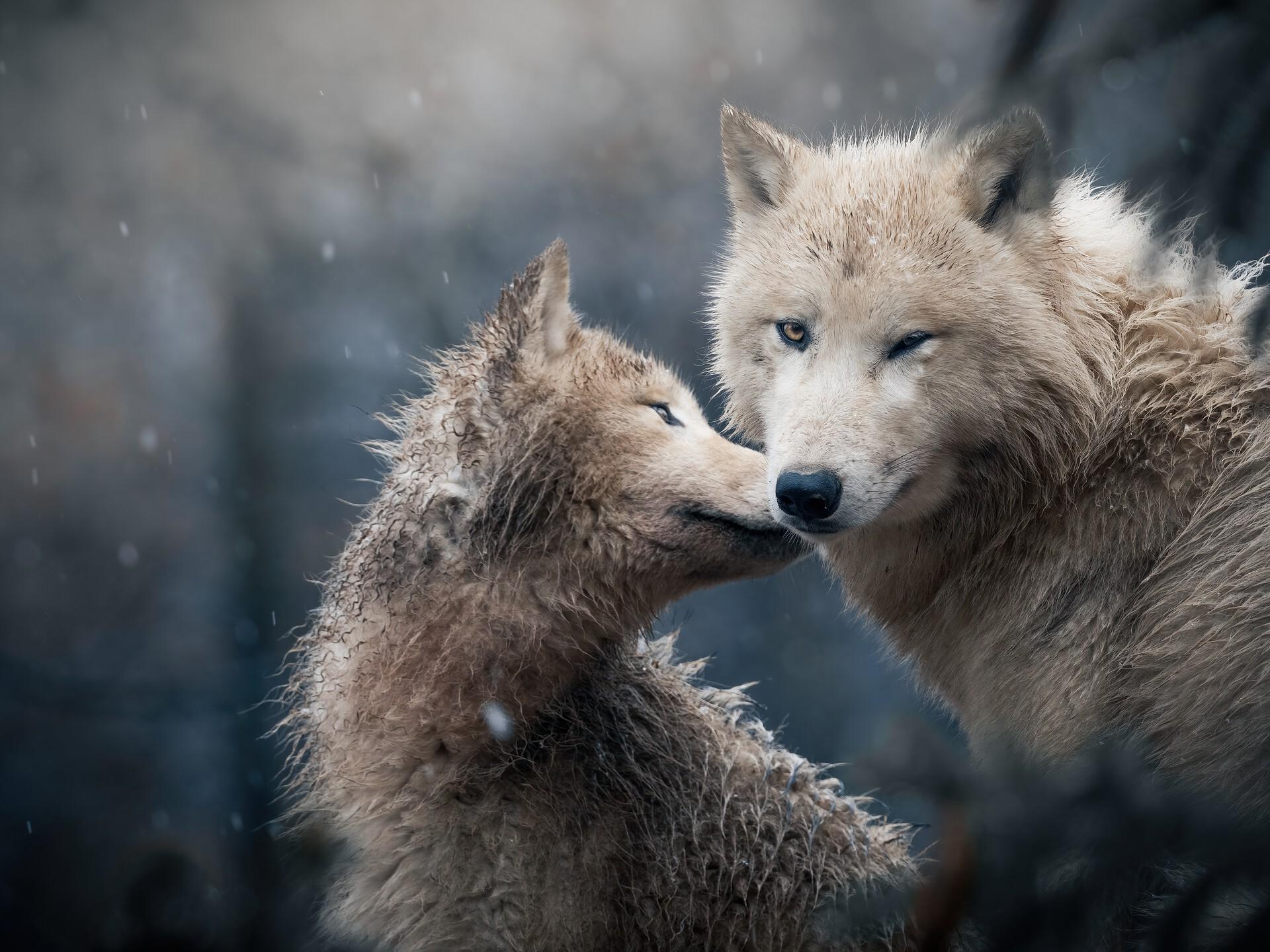 czech nature photo nominace zvířata v lidské péči – Matyáš Slavík