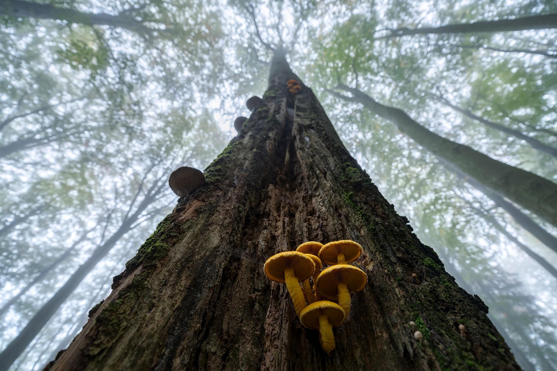 czech nature photo nominace rostliny a houby – Vojtěch Herout