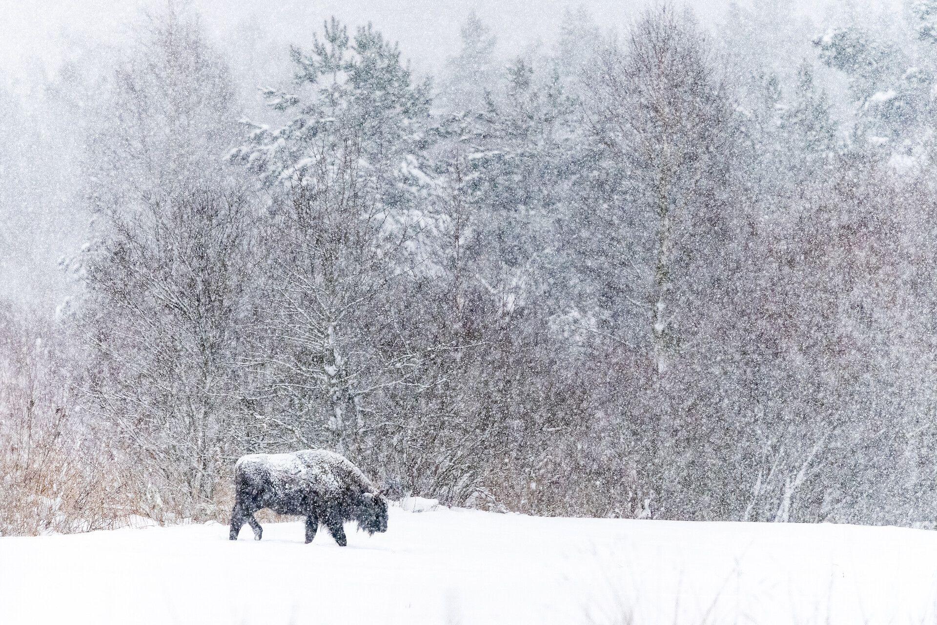 czech nature photo nominace savci – Jan Pokluda