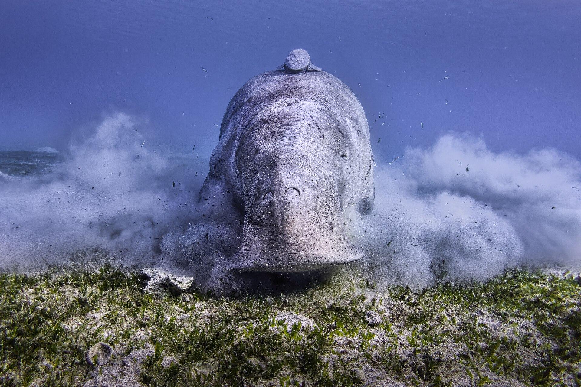 czech nature photo nominace Zvířata ve svém prostředí – Jan Stria