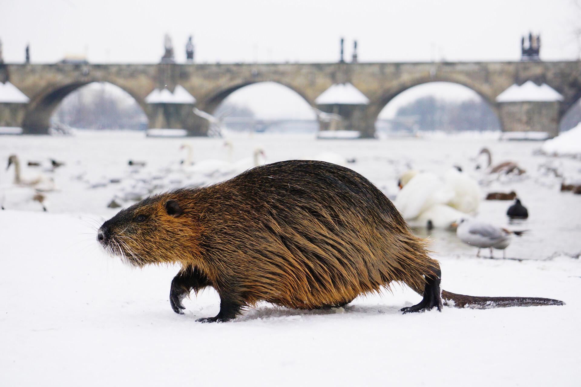 czech nature photo nominace Příroda v Praze - Viktorie Dobrobabenko
