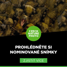 Czech Nature Photo 2018 nominace
